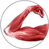 logo_muscle72